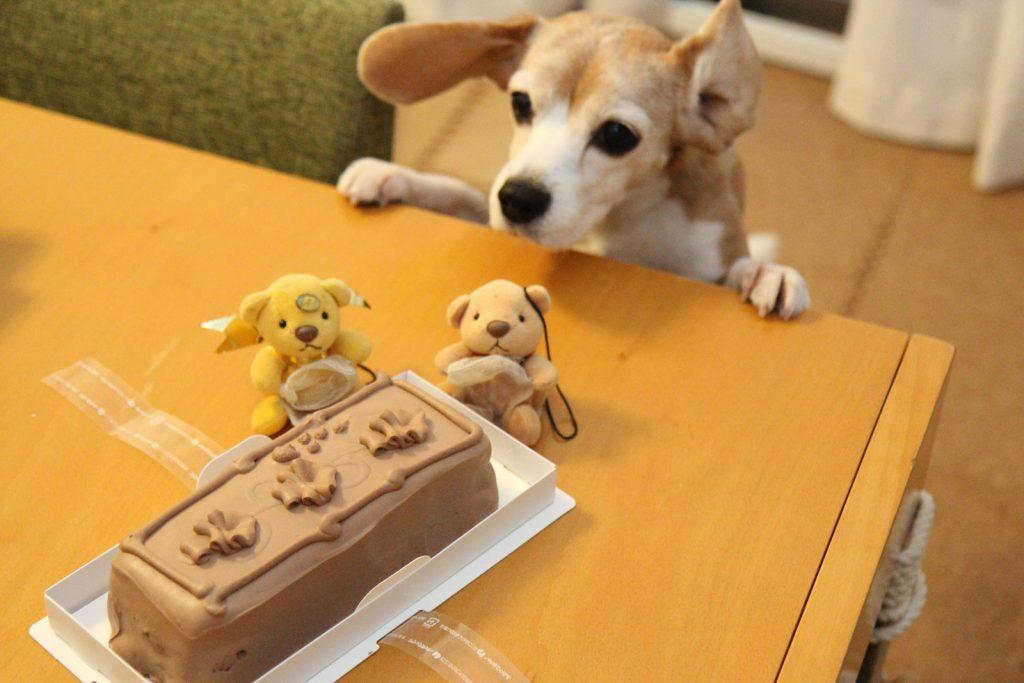 トップスのチョコレートケーキに興奮する犬